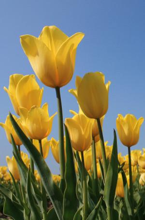 Voorjaar / Pasen